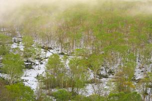 ニセコ高原 残雪と芽吹きの森の写真素材 [FYI04899820]