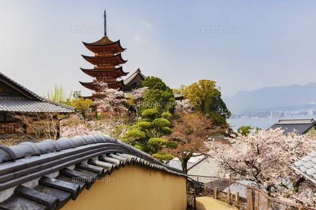 春の宮島、厳島神社(広島県)の写真素材 [FYI04899943]
