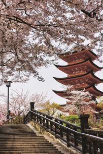 春の宮島、厳島神社(広島県)の写真素材 [FYI04899946]