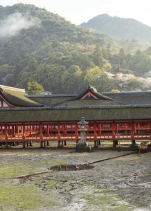 白鷺が遊ぶ厳島神社、鏡の池(広島県、宮島)の写真素材 [FYI04899953]