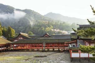 夕霧がかかる春の厳島神社、鏡の池の写真素材 [FYI04899957]