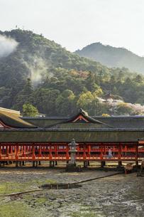夕霧がかかる春の厳島神社、鏡の池の写真素材 [FYI04899958]