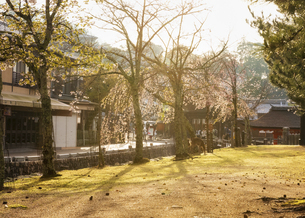 宮島、春の夕景(広島県、宮島)の写真素材 [FYI04899962]
