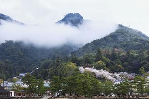 宮島の春の写真素材 [FYI04899969]