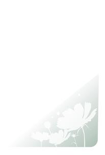喪中ハガキイラスト,コスモスのイラスト素材 [FYI04900017]
