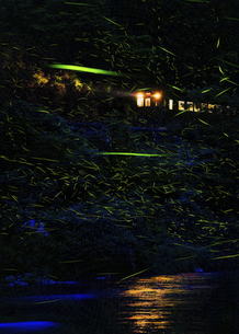 初夏の風物詩「ホタル列車」の写真素材 [FYI04900035]