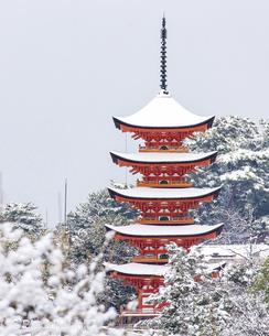 冬の宮島、厳島神社、雪化粧(広島県)の写真素材 [FYI04900040]