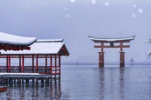 雪化粧した厳島神社の写真素材 [FYI04900043]