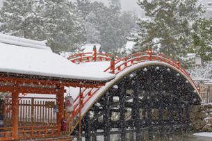 雪化粧した厳島神社の写真素材 [FYI04900044]