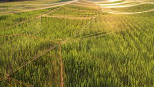 【農業】米の水田 田植えの写真素材 [FYI04900188]