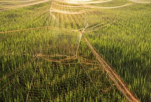 【農業】米の水田 田植えの写真素材 [FYI04900191]