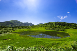 夏の八甲田ゴードラインよ田茂萢湿原と八甲田連峰の山並みの写真素材 [FYI04900279]