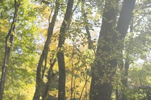 北海道の秋の森林の写真素材 [FYI04900332]