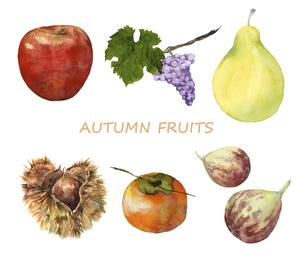 秋の果物の水彩画セットのイラスト素材 [FYI04900475]
