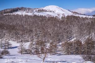 美ヶ原高原 樹林の写真素材 [FYI04900482]