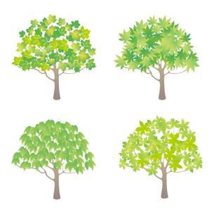 緑葉の樹木イラストセットのイラスト素材 [FYI04900710]