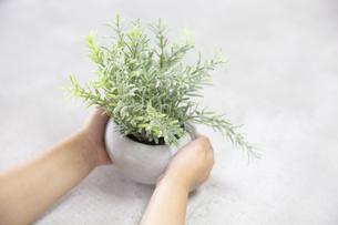 植物を持つ子どもの写真素材 [FYI04900988]