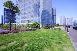 晴海臨海公園の草地の広場と高層タワーマンション群の写真素材 [FYI04901305]