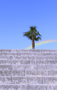 石の階段とパームツリーの写真素材 [FYI04901308]