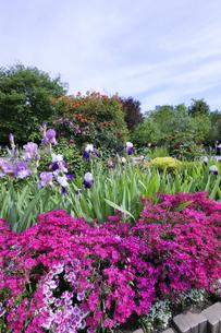 芝公園の花壇の花の写真素材 [FYI04901336]