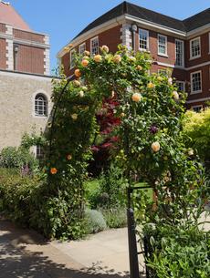 テンプルの庭のバラのアーチの写真素材 [FYI04901521]