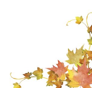 秋の紅葉のデコレーション 水彩イラストのイラスト素材 [FYI04901646]