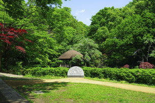 青空広がる東高根森林公園(神奈川県川崎市)の写真素材 [FYI04901713]