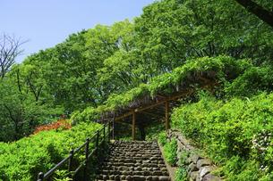 青空広がる東高根森林公園(神奈川県川崎市)の写真素材 [FYI04901718]