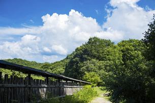 【夏】入道雲が浮かぶ田舎の森林と山道 夏休みの写真素材 [FYI04901787]
