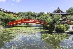 神泉苑法成就池にかかる朱色の法成橋の写真素材 [FYI04901960]