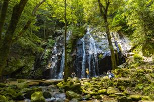 金引の滝の写真素材 [FYI04902291]