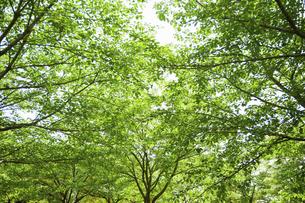 新緑の雑木林の写真素材 [FYI04902387]