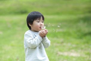 タンポポの綿毛を吹く男の子の写真素材 [FYI04902467]