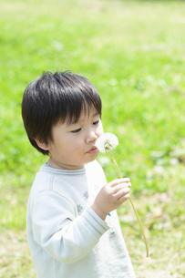 タンポポの綿毛を持つ男の子の写真素材 [FYI04902473]