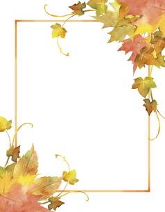 秋の紅葉のフレームのイラスト素材 [FYI04902701]