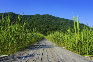 榛名湖の湖畔に続く木道、県立榛名公園(群馬県高崎市)の写真素材 [FYI04902909]