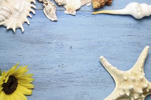 向日葵と貝殻の写真素材 [FYI04903035]