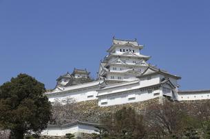 初春の姫路城の写真素材 [FYI04903283]
