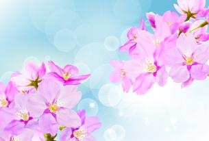 桜のイラスト素材 [FYI04903440]