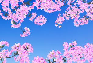 桜のイラスト素材 [FYI04903515]