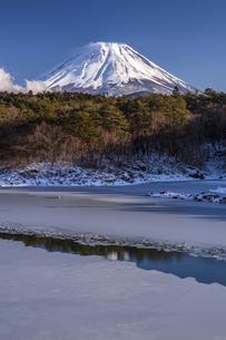 結氷の精進湖と富士山の写真素材 [FYI04903550]