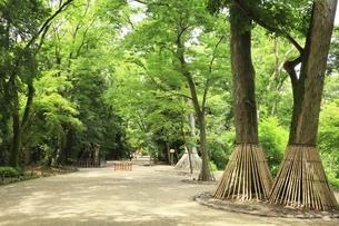 下鴨神社 糺の森の写真素材 [FYI04903615]