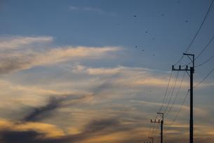 夕焼け雲と電線から飛び立つスズメの群れの写真素材 [FYI04904185]