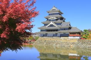 紅葉の松本城の写真素材 [FYI04904293]