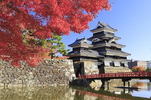 紅葉の松本城の写真素材 [FYI04904296]