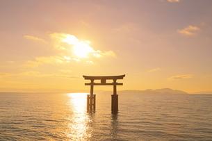 朝の白髭神社の湖中大鳥居の写真素材 [FYI04904314]