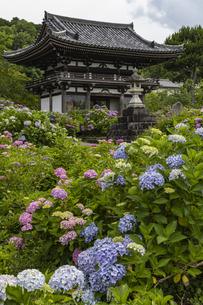 観音寺 山門とアジサイの写真素材 [FYI04904324]