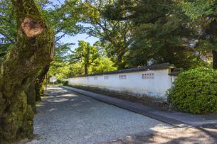 小田原城址公園 二の丸を囲う塀の写真素材 [FYI04904436]
