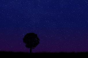 星空に草原と木のシルエットのイラスト素材 [FYI04904589]