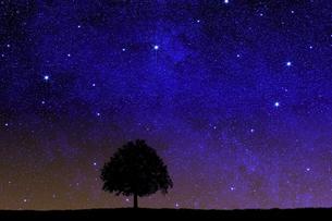星空に草原と木のシルエットのイラスト素材 [FYI04904590]